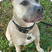 Adopt A Pet :: Bandit - Orlando, FL