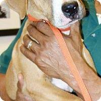Hound (Unknown Type) Mix Puppy for adoption in McDonough, Georgia - Pecan