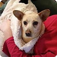 Adopt A Pet :: Missy-adoption pending - Landenberg, PA