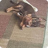 Adopt A Pet :: Enzo - Windermere, FL