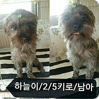 Adopt A Pet :: Spirit - Oakton, VA