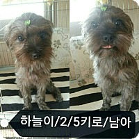 Adopt A Pet :: Spirit - Adoption Pending - Oakton, VA