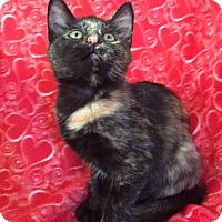 Adopt A Pet :: Madison and Mallory - Bloomsburg, PA