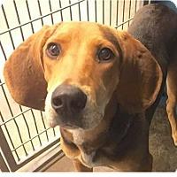 Adopt A Pet :: Hazel - Springdale, AR