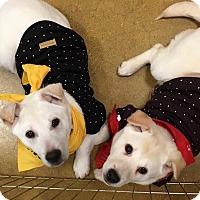 Adopt A Pet :: Magic Mike - Smithtown, NY
