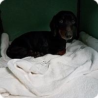 Adopt A Pet :: JAKE - Lubbock, TX