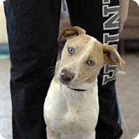 Adopt A Pet :: Star - Fremont, NE