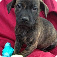 Adopt A Pet :: Keini - Louisville, KY
