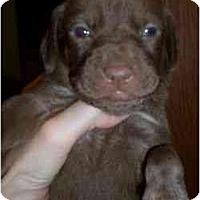 Adopt A Pet :: Dalida - Novi, MI