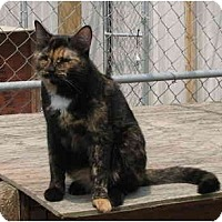 Adopt A Pet :: Pandy & Vincent - Cincinnati, OH