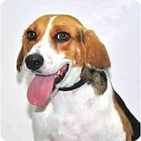 Adopt A Pet :: Wally - Port Washington, NY
