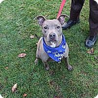 Adopt A Pet :: Courtesy Post: Mouse - Woodbridge, CT