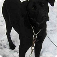 Adopt A Pet :: Mazy - Toronto/Etobicoke/GTA, ON