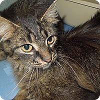 Adopt A Pet :: Jonathan - Medina, OH