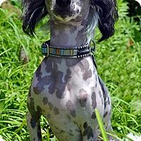 Adopt A Pet :: Chance-Adoption pending - Bridgeton, MO