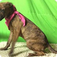 Adopt A Pet :: Midge - Rochester, NY