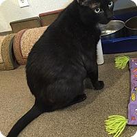 Adopt A Pet :: Marky Mark - Boca Raton, FL