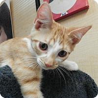 Adopt A Pet :: Sundance - Riverside, CA