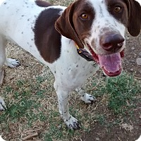 Adopt A Pet :: Billow Louise - Woodland, CA