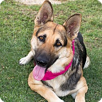 Adopt A Pet :: Nadia - Patterson, CA
