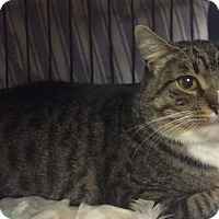 Adopt A Pet :: Cecil - Oakland, OR