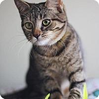 Adopt A Pet :: Maddie - Markham, ON