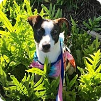 Adopt A Pet :: Marley - Ft. Lauderdale, FL