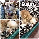 Adopt A Pet :: Sugar