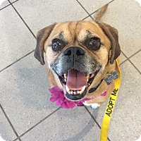 Adopt A Pet :: Hazel - Newtown, CT