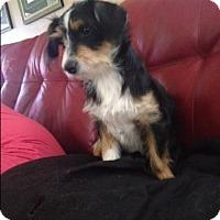 Adopt A Pet :: Sparkle - Oakley, CA
