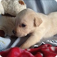 Adopt A Pet :: Odessa - springtown, TX