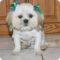 Adopt A Pet :: Wickett - Palo Alto, CA