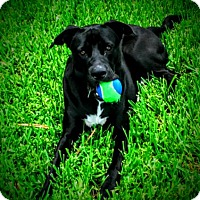 Adopt A Pet :: Negan - Miami, FL