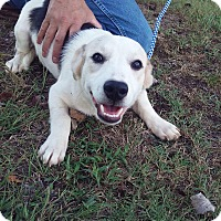 Adopt A Pet :: Nutmeg~ meet me! - Glastonbury, CT
