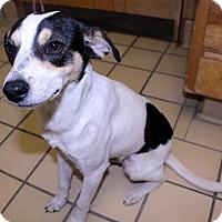 Adopt A Pet :: Benny - Lumberton, NC
