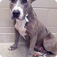Adopt A Pet :: Mystic - Shorewood, IL