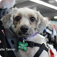 Adopt A Pet :: Kalli Tanner - Seattle, WA