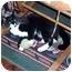 Photo 2 - Domestic Shorthair Kitten for adoption in Winnsboro, South Carolina - Christian