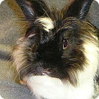 Adopt A Pet :: Lucia - Newport, DE