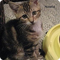 Adopt A Pet :: Nutella - Portland, OR