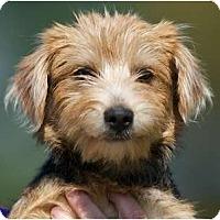 Adopt A Pet :: Parker - Providence, RI
