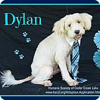 Adopt A Pet :: Dylan - Plano, TX