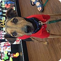 Adopt A Pet :: Jeb - Knoxville, TN