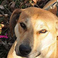 Hound (Unknown Type) Mix Dog for adoption in Davis, Oklahoma - Naomi OKs31