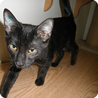 Adopt A Pet :: TicTac - Milwaukee, WI