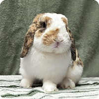 Adopt A Pet :: Theodore - Fountain Valley, CA