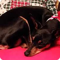 Adopt A Pet :: Talia - McDonough, GA