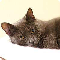 Adopt A Pet :: Ruby - East Hartford, CT