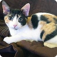 Adopt A Pet :: Maggie - Arlington/Ft Worth, TX