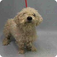 Adopt A Pet :: Isaac - Bernardston, MA